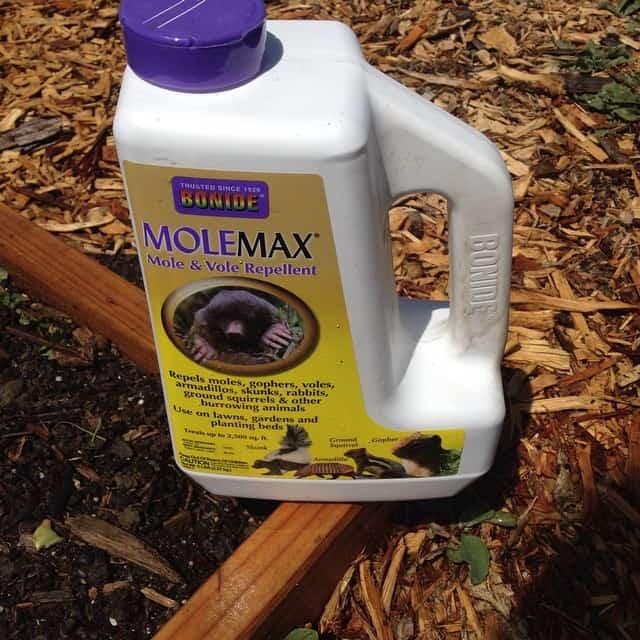 molemax chipmunk repellent