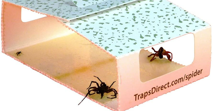 45 Insect Spider Traps