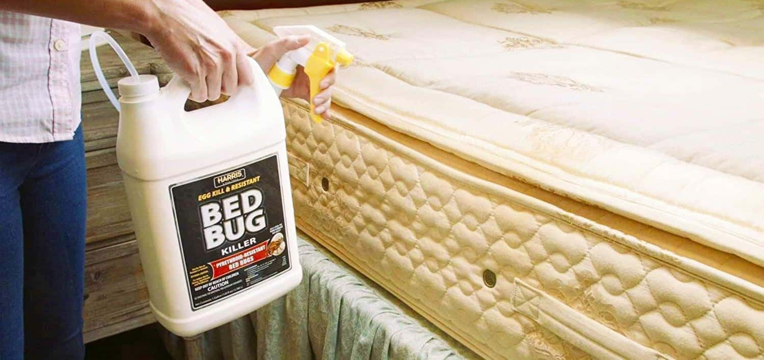 using bed bug spray on the bed