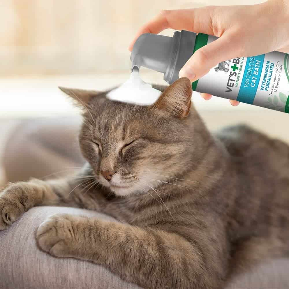 person uses flea treatment on the cat