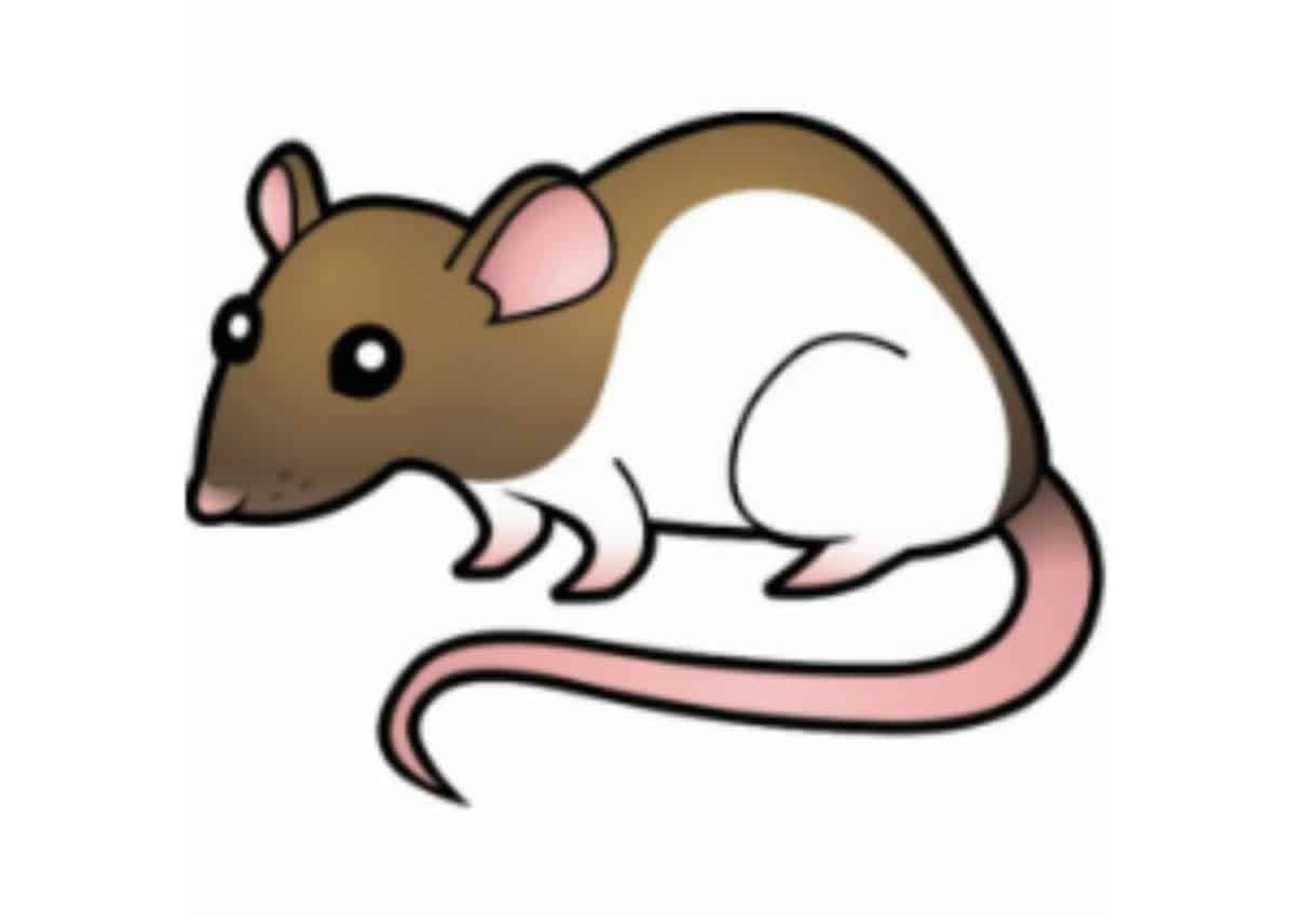 🐀 8 Best Rat Poisons Reviewed by Expert