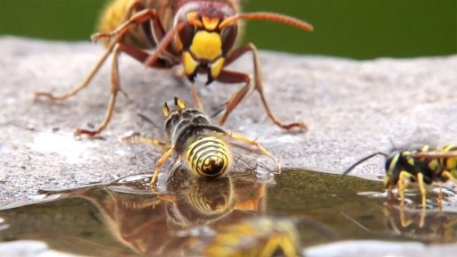 A hornet and a wasp