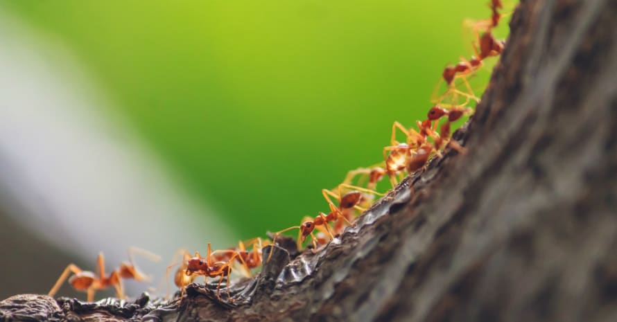 Ants climb a tree