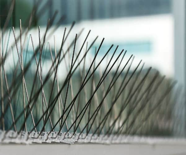 Aspectek Stainless Steel Bird Spikes