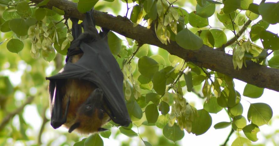 Bat on a branch head down