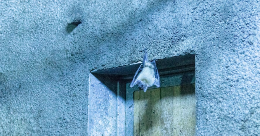 Bat over the door
