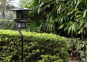 Best Mosquito Traps to Buy