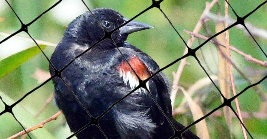 Bird-X Standard Bird Netting Ideal