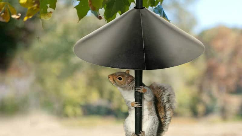 Black Squirrel Baffle with a Little Squirrel