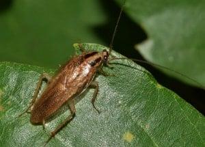 bug on the leaf