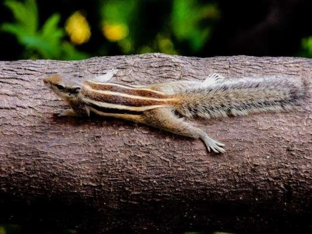 Chipmunk resting on a branch