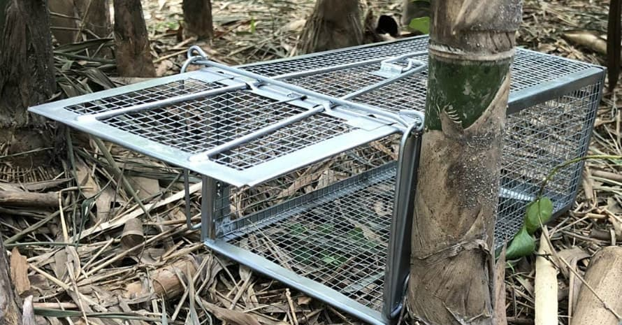 Gingbau Live Traps for Chipmunks Rats