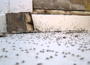 many ants in the bathroom