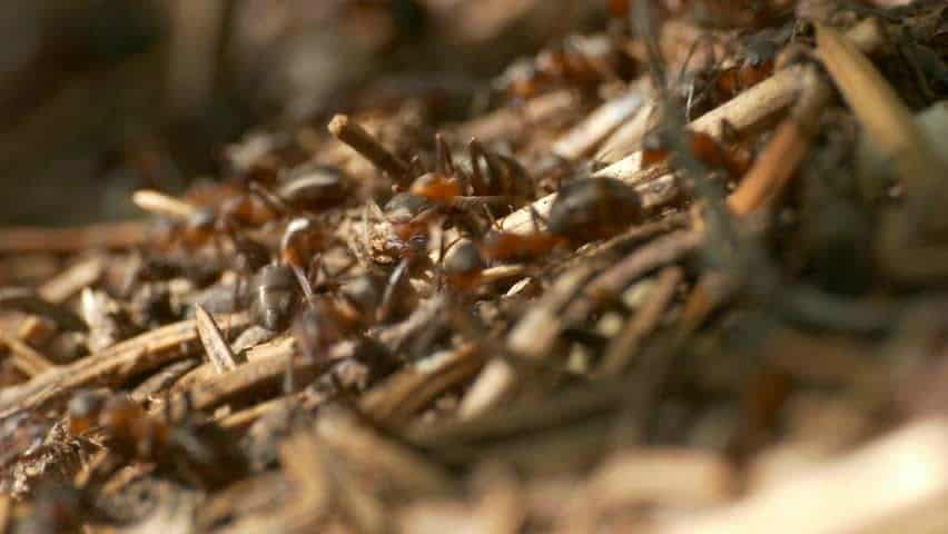 Reviewing the Best Way to Get Rid of Fire Ants