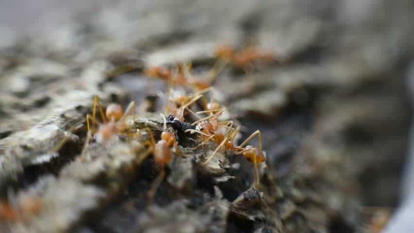How to Get Rid of Fire Ants Permanently – Four of the Best Methods