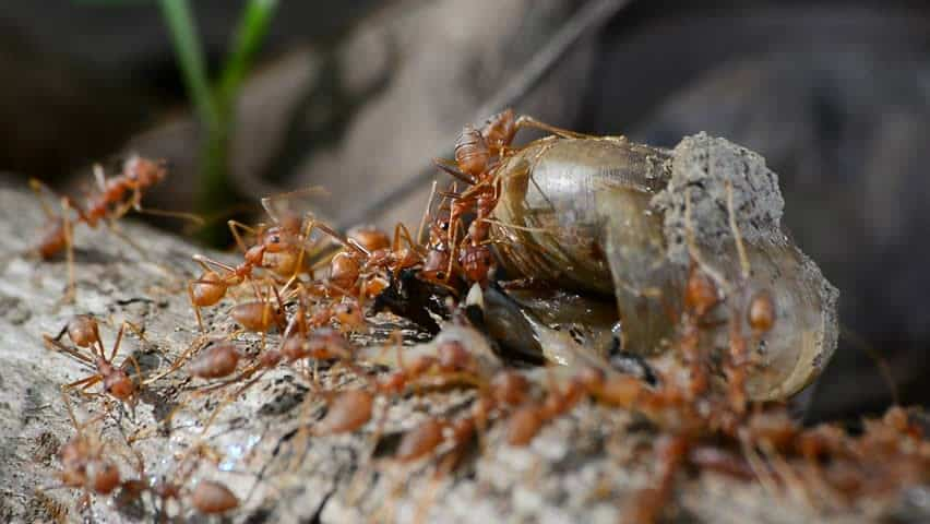 How to Get Rid of Fire Ant Hills Using Insecticides