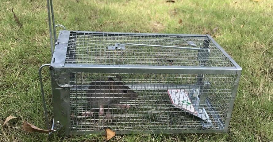 Kensizer Small Animal Humane Live Cage Rat