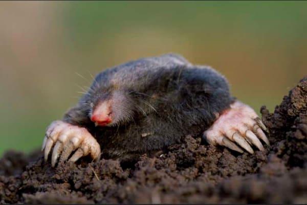 Mole climbed out of the hole