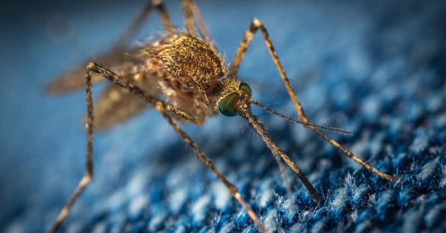 Mosquito on a blue blanket