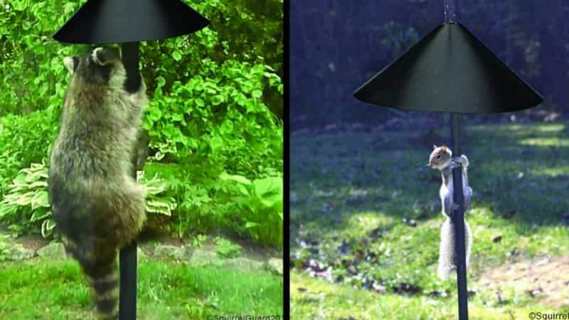 Raccoon & Squirrel Guard Baffle Protects Hanging Bird Feeders