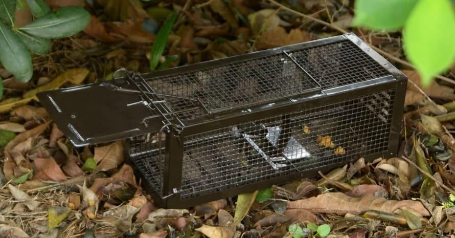 RatzFatz Mouse Trap Humane Live Cage
