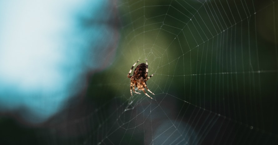 Spider on the net on a green background