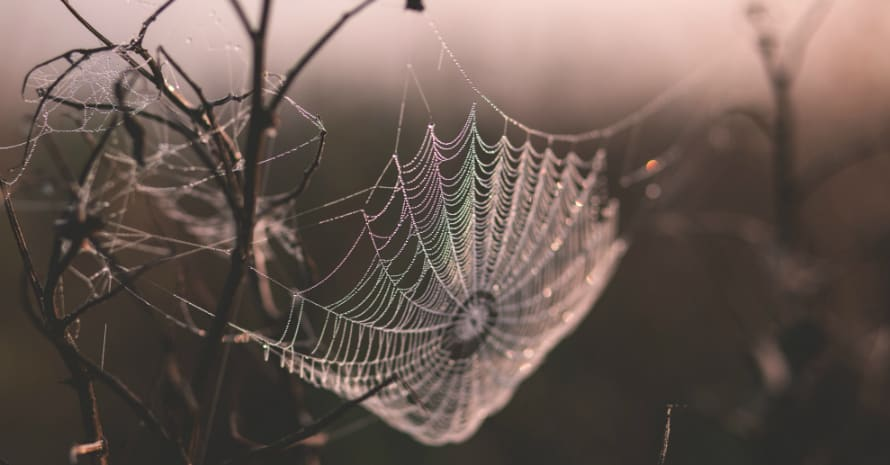 Spider web on a branch