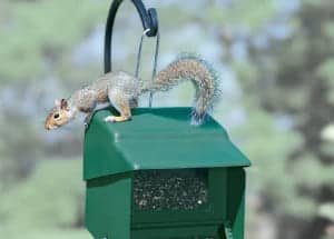 Stop-a-Squirrel Green Bird Seed Feeder
