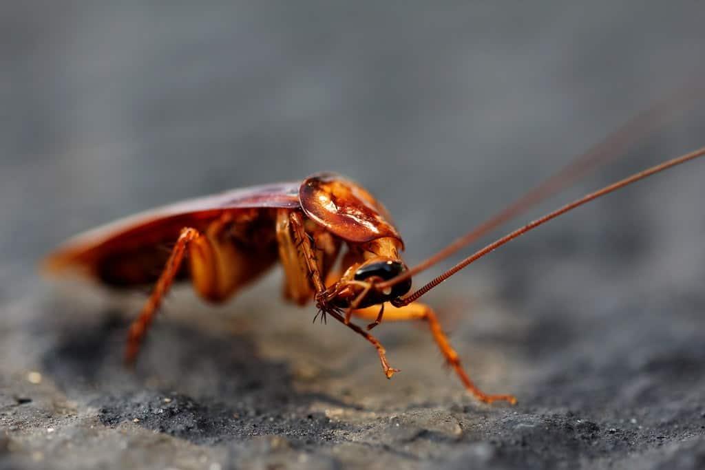 a-roach-in-macro