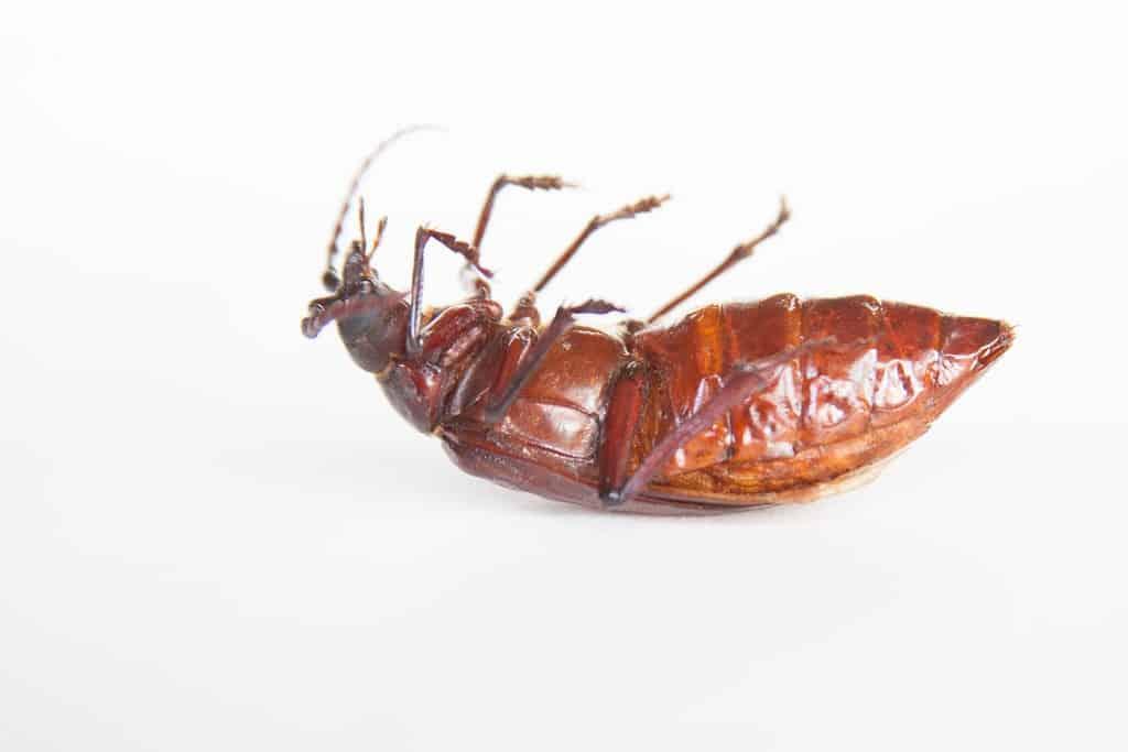 a-roach-macro