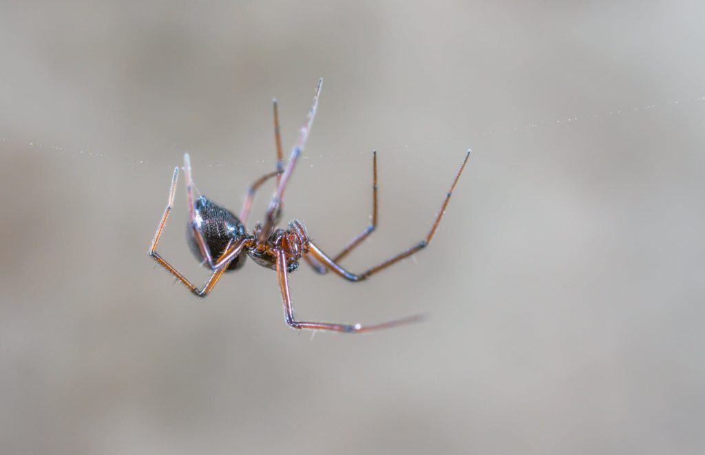 a-spider-in-macro