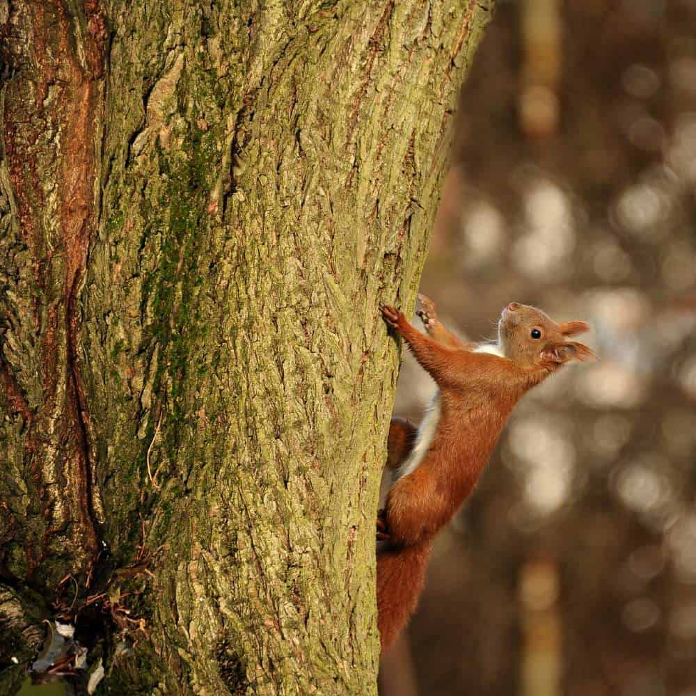 a-squirrel