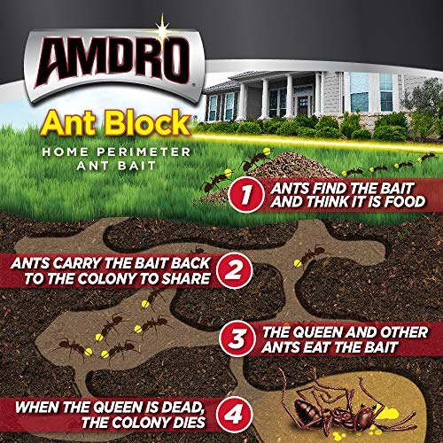 how the amdro ant bait works infographic