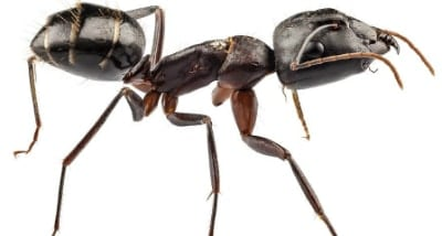 Tips on Choosing (and Using) the Best Ant Killer