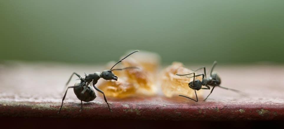 Top 5 Best Indoor Outdoor Ant Killers 2020 Updated