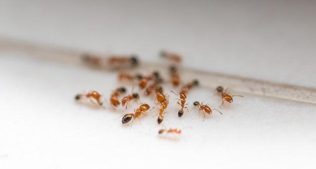 Ants on the white foor