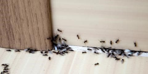 How To Get Rid Of Ants In The Bathroom Methods That Work