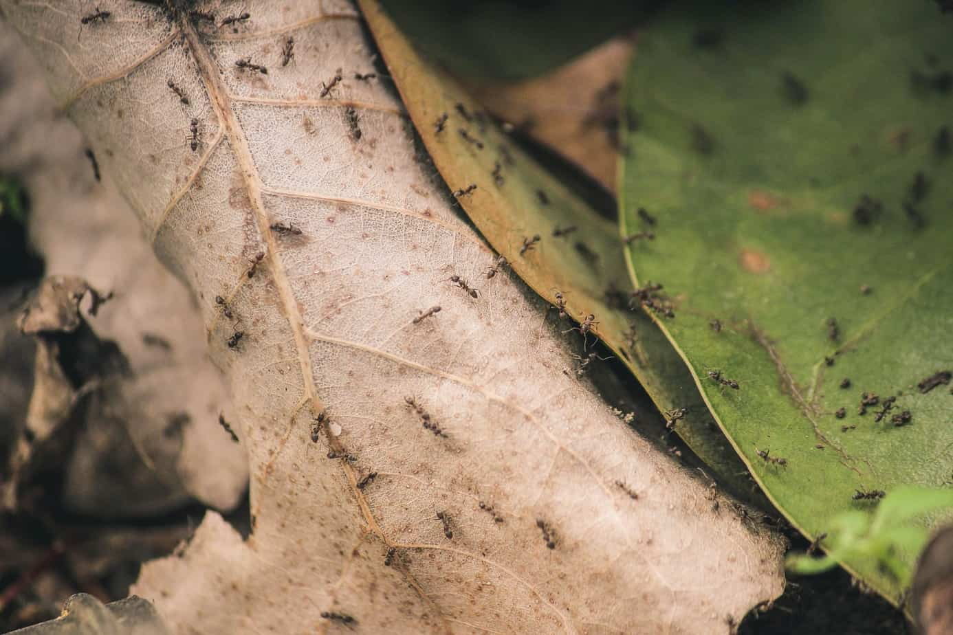 ants on the leaf