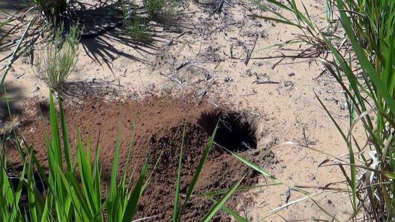 armadillo-hole