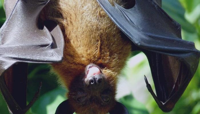 bat hanging on a tree