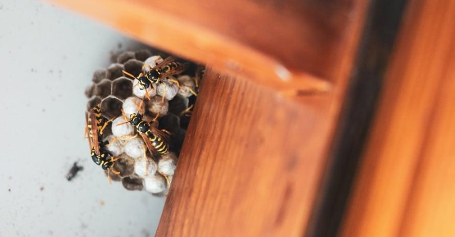bee clues outside the window