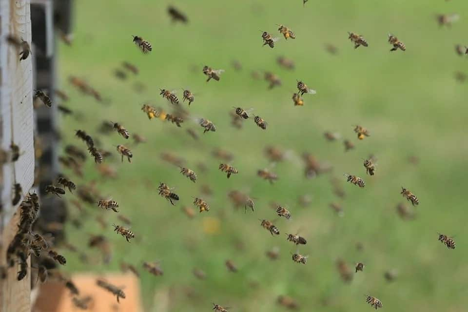 colony of bees flying