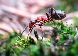 ant in the forest