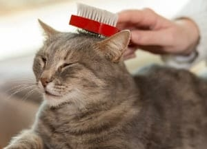 person brushing a cat