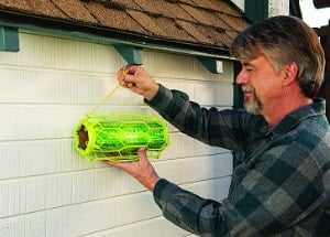 man installing carpenter bee trap