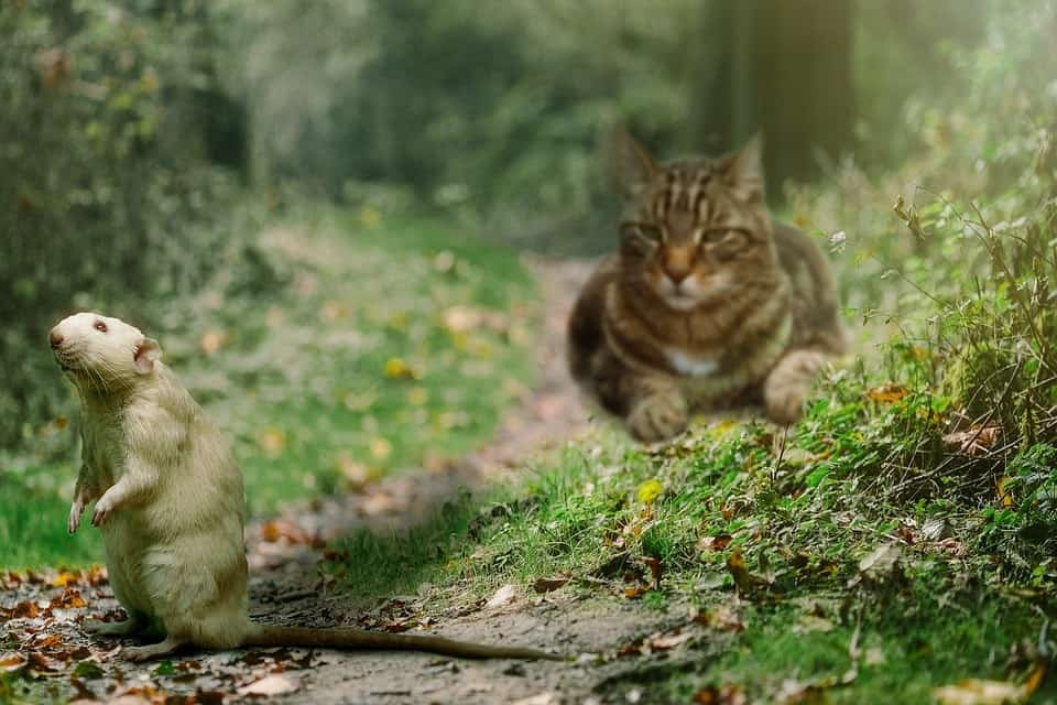cat and mouse in the forest