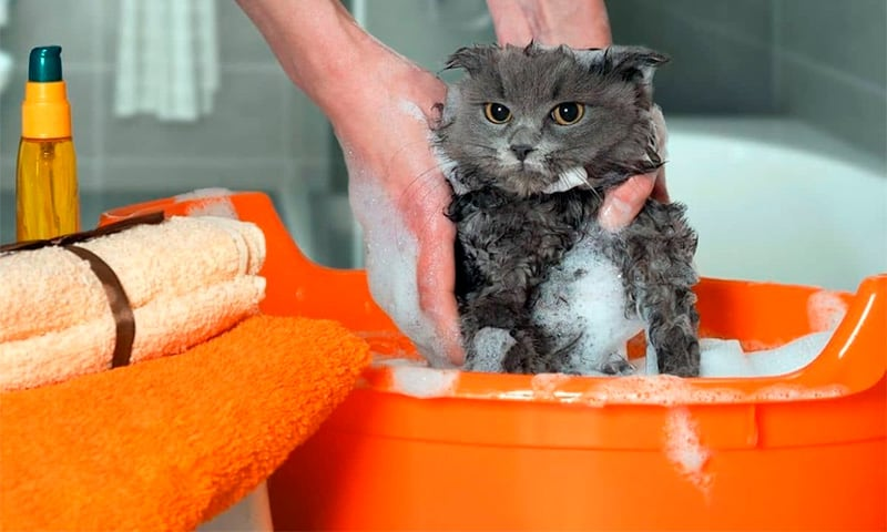 cat is washing