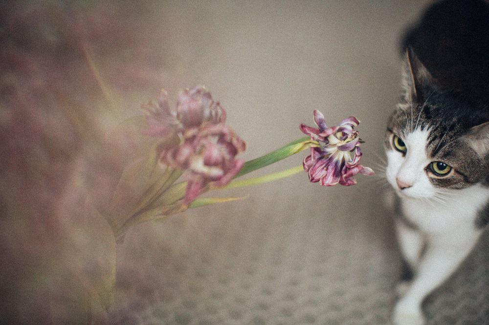 cat staring the flower