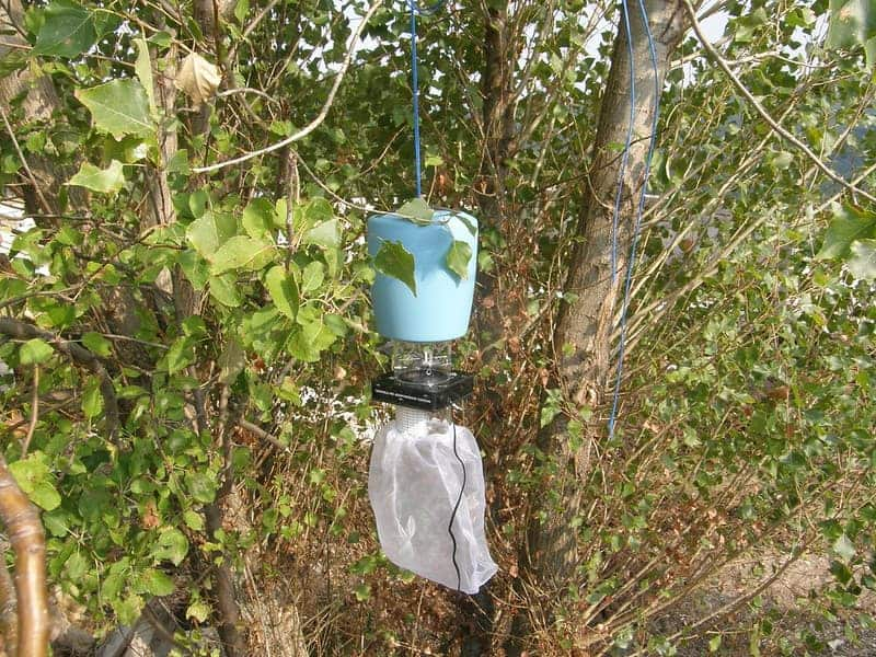 co2 trap hanging on tree