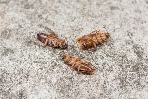 cockroach on the concrete floor